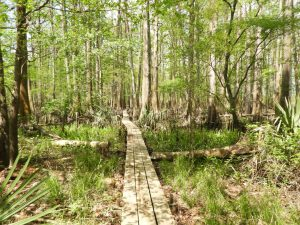Boardwalk through grasses and forest at Bayou Magic